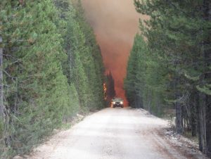 A vehicle escaping a forest fire