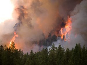 Little Queens Fire, Boise NF, Atlanta, Idaho, 2013