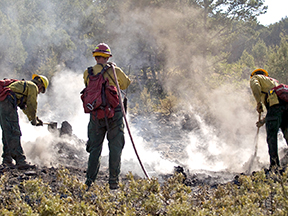 Little Bear Fire, Lincoln National Forest, New Mexico, June, 2012; crew mopping-up on the day after the burn operation, June 15